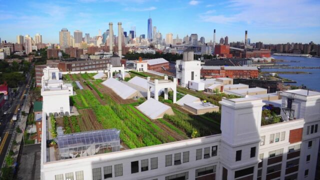 Brooklyn Grange Rooftop Farm #2 – Project of the Week 6/6/16