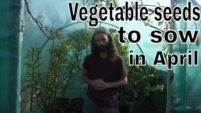Vegetable Seeds to sow in April