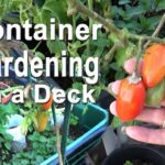 Patio & Deck Raised Bed Container Gardening Grow Vegetable Garden Food Small Spaces Tomatoes Herbs