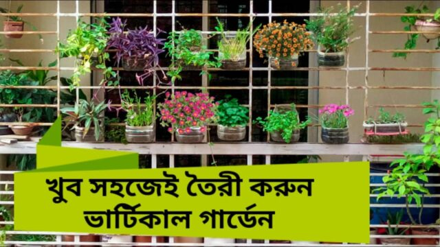 Vertical Garden without any cost | ভার্টিকাল গার্ডেন