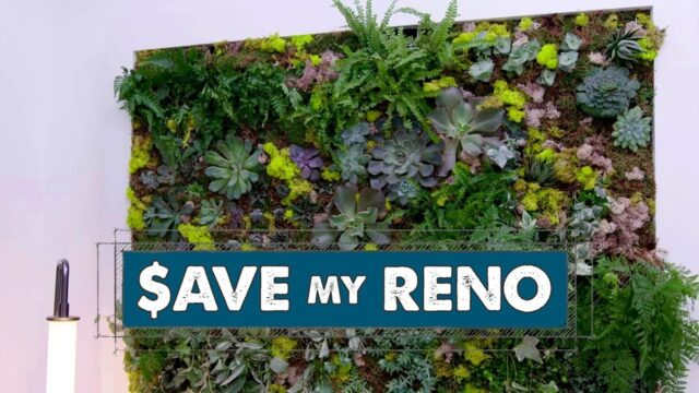 DIY Living Plant Wall | Save My Reno
