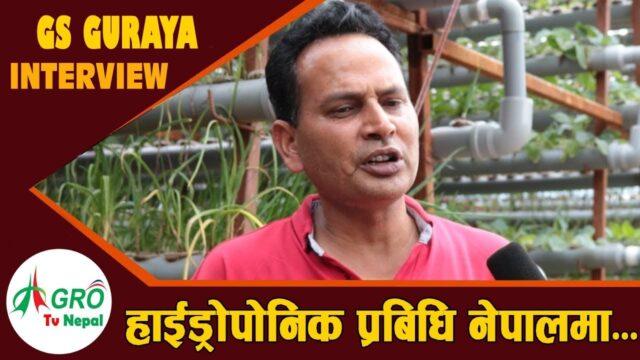 हाईड्रोपोनिक प्रबिधि खेति प्रणाली नेपालमा  || what is Hydroponics farming || Agro Tv Nepal