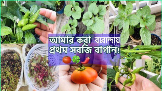 বারান্দায় আমার করা প্রথম সবজি বাগান|My First Balcony Vegetable Garden|Bangladeshi American Vlogger