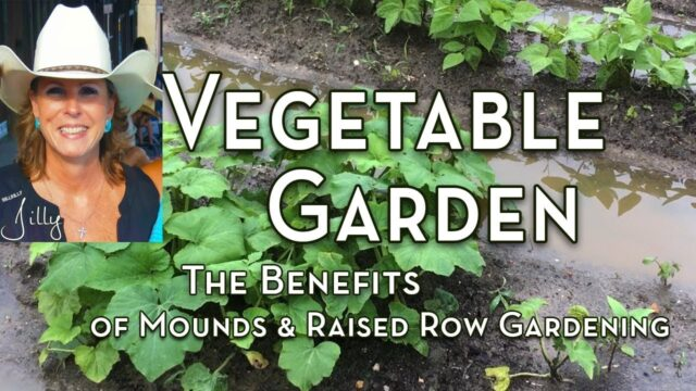 Vegetable Garden Mounds and the Benefits of Raised Row Gardening