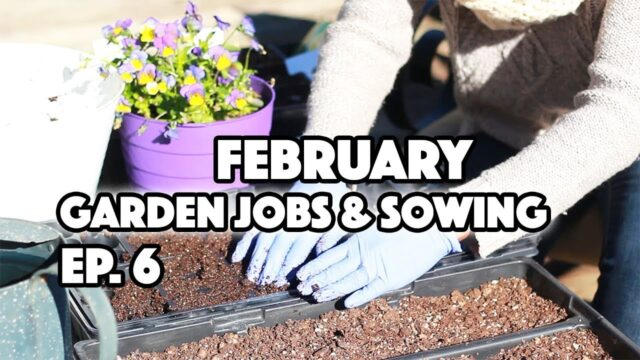 NEW! FEBRUARY GARDEN JOBS AND WHAT TO SOW GROW ALONG EP 6
