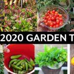 California Gardening May 2020 Garden Tour – Vegetable and Fruit Trees Gardening Tips!