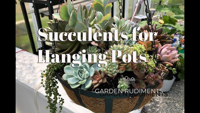 Succulents For Hanging Pots