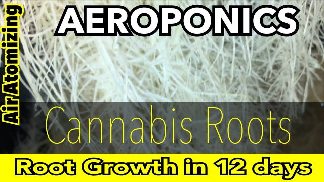How To Cultivate / Maintain Healthy Cannabis Aeroponic Roots HPAA / CO2 Monitor / Grow Time Lapse