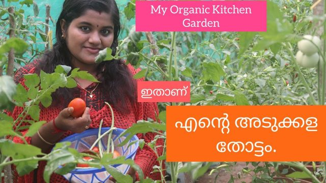 എന്റെ അടുക്കള തോട്ടം ! Organic #Vegetable Garden At Home ! Kitchen Garden.