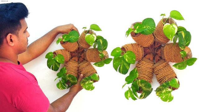 New Way to Grow Money Plant / Hanging Money plant / Wall Planting Ideas