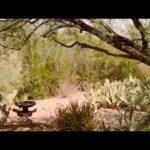 Domestic Desert Garden, Scottsdale, Arizona, USA
