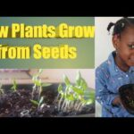HOW PLANTS GROW FROM SEEDS FOR CHILDREN / Kids learning / Science for kids