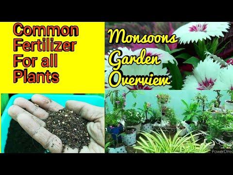 Sunday Update Garden Overview Common Fertilizer For All Plants, सभी पौधे का एक Fertilizer