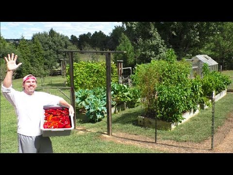 Garden TOUR HARVEST September 19th container gardening fall organic vegetable patio