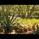 4 Desert style Gardens, Arizona & California, USA