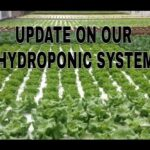 UPDATE on our RDWC Hydroponic system
