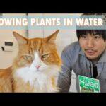 Indoor Hydroponics (growing plants in water) 🌱 Garden vlog