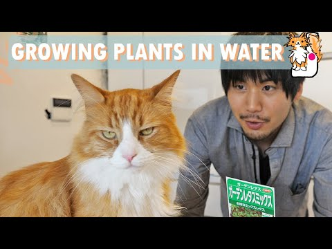 Indoor Hydroponics (growing plants in water) 🌱 Garden vlog