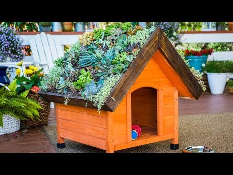 DIY Living Roof Dog House – Home & Family