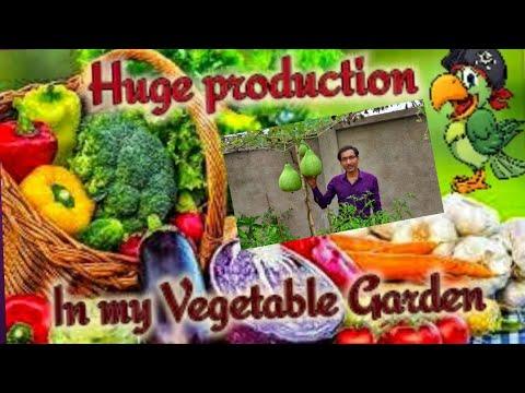 Unbelievable Production in My Vegetable Garden