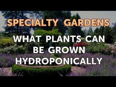 What Plants Can Be Grown Hydroponically
