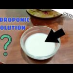 Make your own Hydroponic Solution for Plants