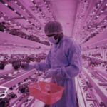 Can Vertical Farms Fix the Future of Food?