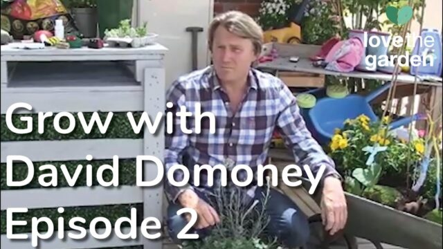 Grow with David Domoney Episode 2: Gardening with children