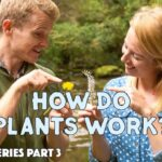 Plants For Kids // Science Videos for Kids