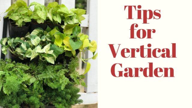 How to make a vertical garden||Tips to create vertical garden||Backyard gardening
