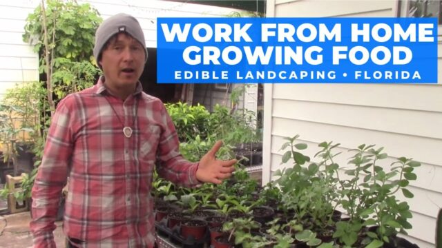Turn Your Gardening Hobby into a Job & Work from Home Growing Food