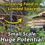 10 Tips to Maximise Food Production in a Small Vegetable Garden   Small Scale Veg Growing #1
