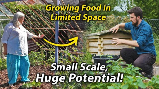 10 Tips to Maximise Food Production in a Small Vegetable Garden | Small Scale Veg Growing #1
