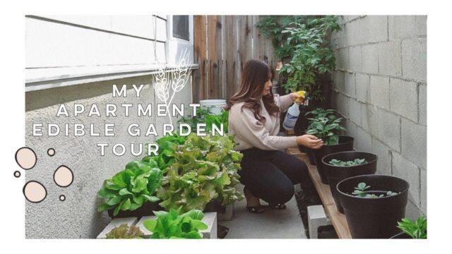 My Apartment Edible Garden Tour 🍅🥬🌶🍓 | Jamie Kate