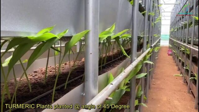 Hi Tech Vertical Farming Growth of Plants