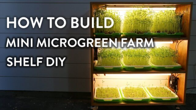 How to Build Mini Indoor Microgreen Farm Shelf DIY