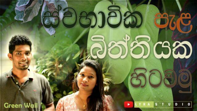 Natural Green wall | Before & After | DIY | in Sinhala | Srilanka