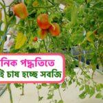 মাটি ছাড়াই চাষ হচ্ছে সবজি | Hydroponic Farming in bangladesh | হাইড্রোপনিক পদ্ধতি |Hydroponic system