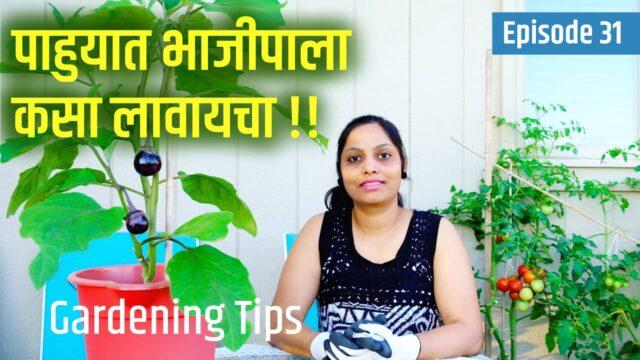 चला पाहुयात भाजीपाला कसा लावायचा !!  Vegetable Gardening Tips, Marathi VLog USA, #AmericaAndMe