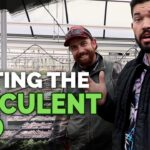Secret Succulent Care Tips From a Master Succulent Grower
