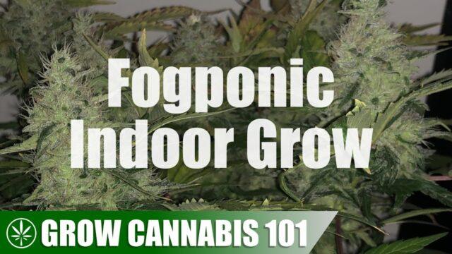 Fogponic / Aeroponic Clone to Harvest Timelapse Grow
