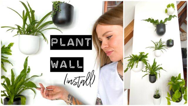 PLANT WALL INSTALL