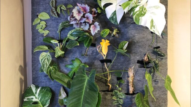 Installing Rare Plants On Our Indoor Living Wall   Plant It Forward
