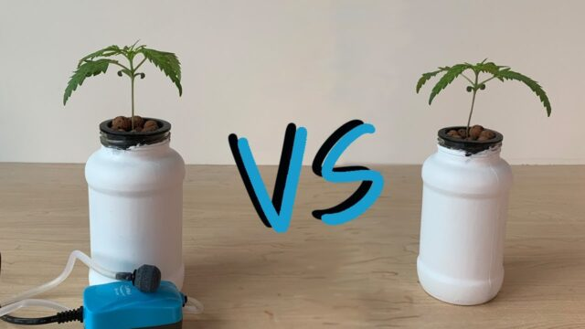 Do Hydroponic Cannabis Plants Need an Air Pump?  Aeration vs No Aeration