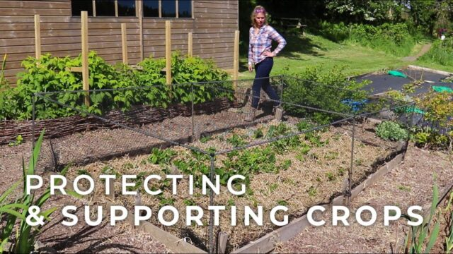 Protecting and Supporting Crops in the Vegetable Garden