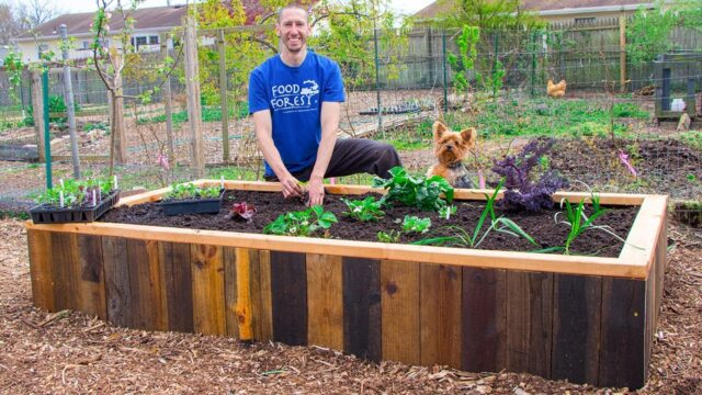 How to Build a RAISED BED Using PALLETS, FREE Backyard Gardening