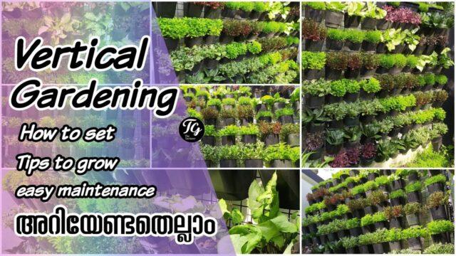 ഒരു vertical Garden എങ്ങനെ സെറ്റ് ചെയ്യാം എന്ന് നോക്കാം | Tips and maintenance for vertical garden