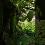 Vegetable gardening UK 2019