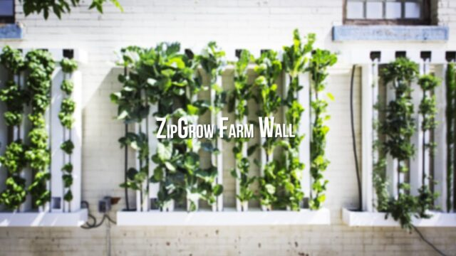 How to Grow Food on Walls