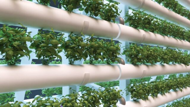 High-hanging fruit?: Feeding cities with vertical farming